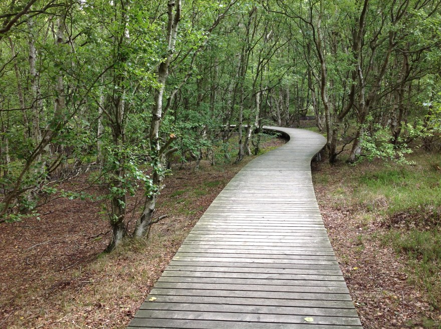 Boardwalk through swampy area