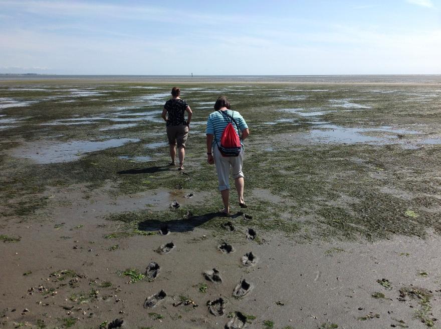 A slog through Wattenmeer mud