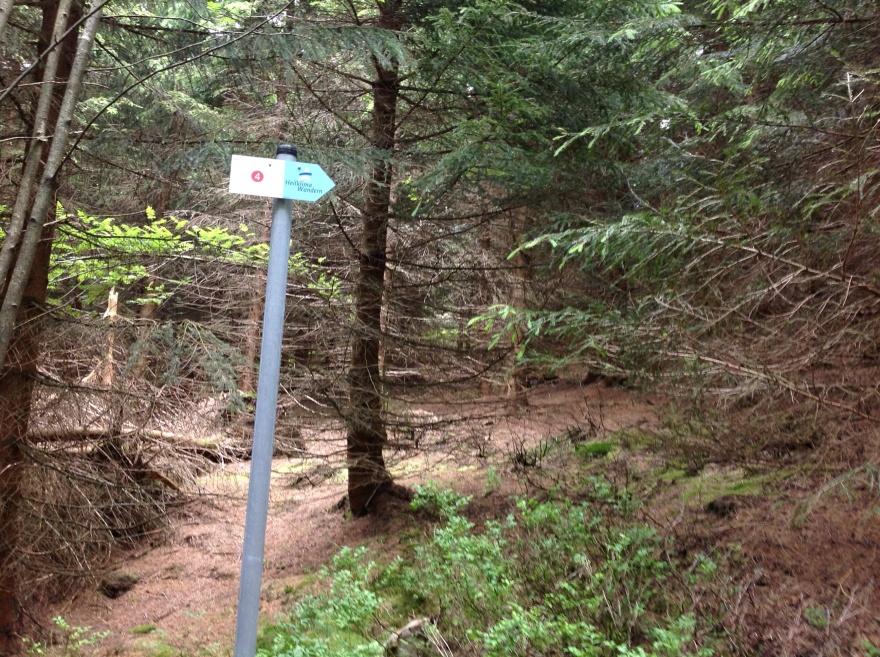 Harz conifers