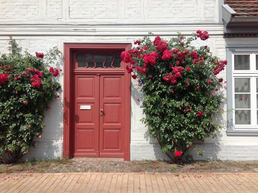 Roses tucked in between sidewalk and house