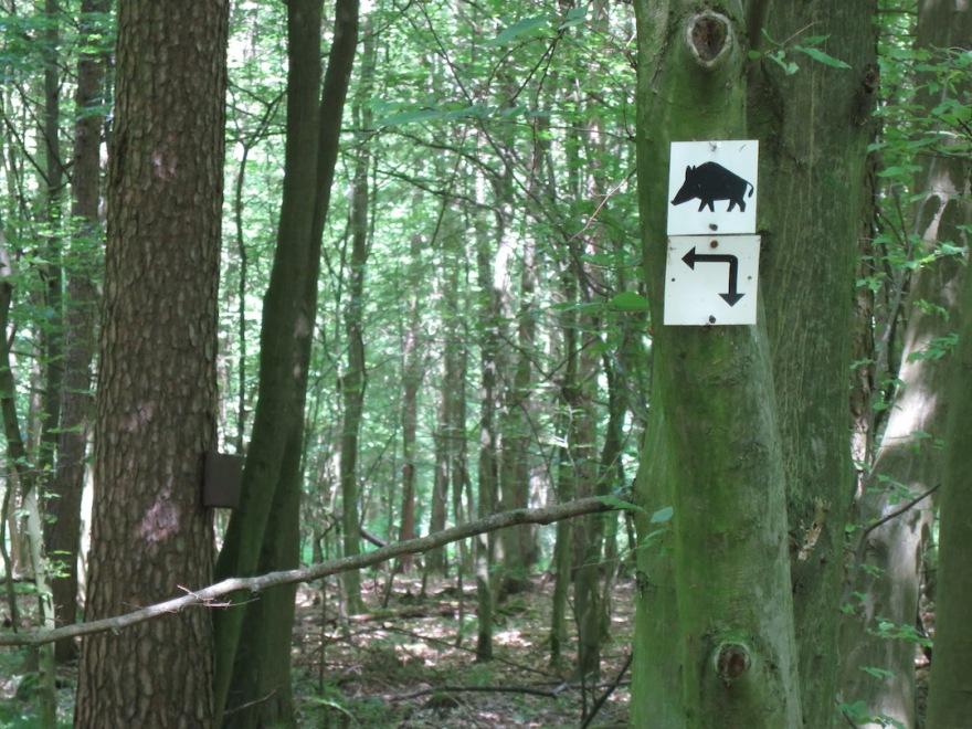 Wild boar territory