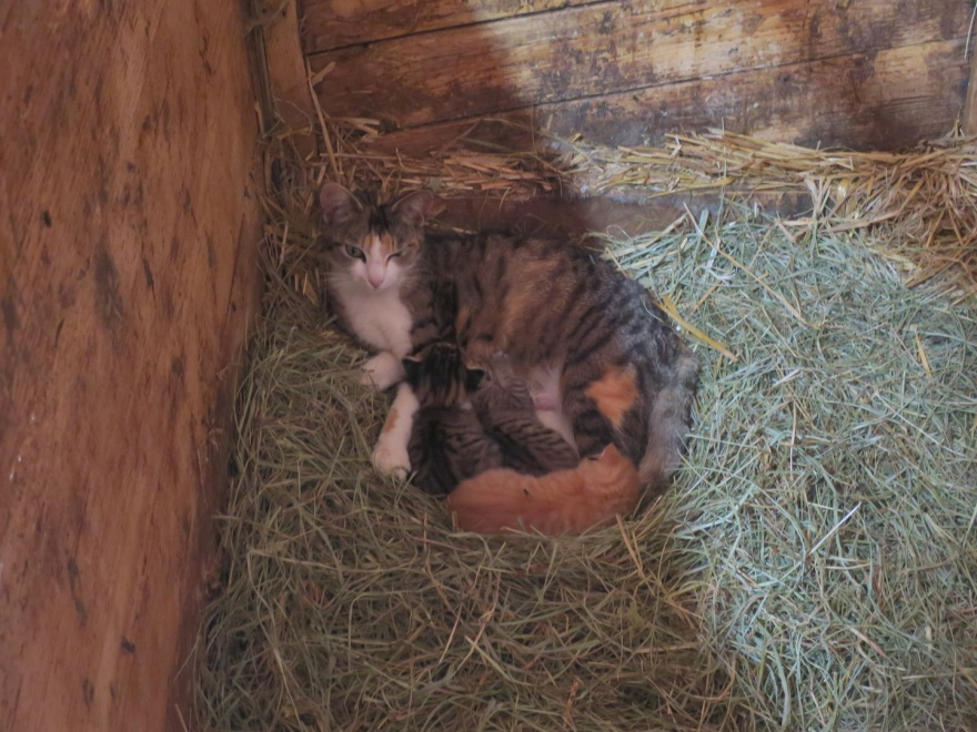 One of the cats recently had kittens.