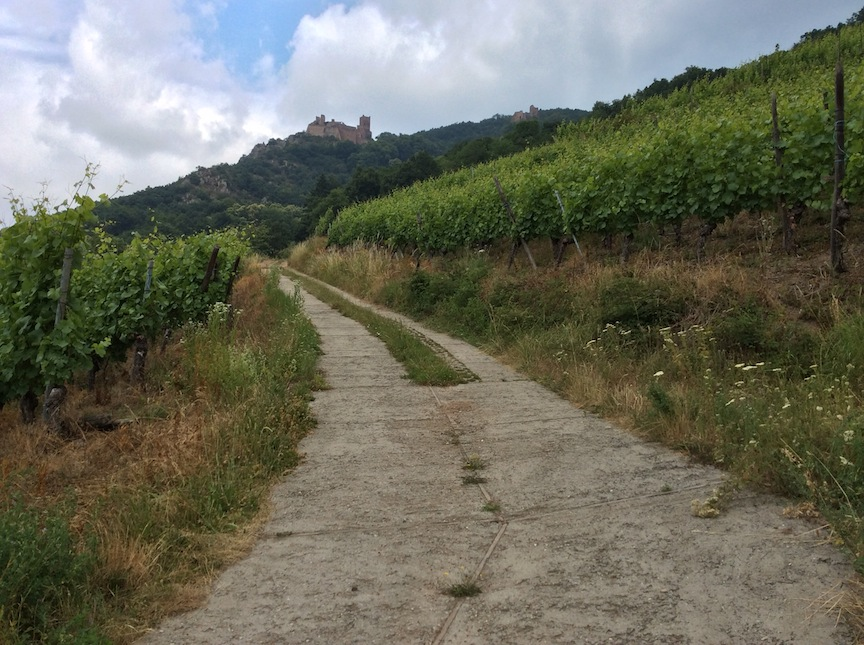 Into the vineyards. There were no no trespassing signs.