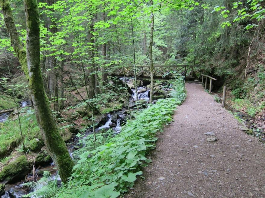 We so enjoyed the nice trails.