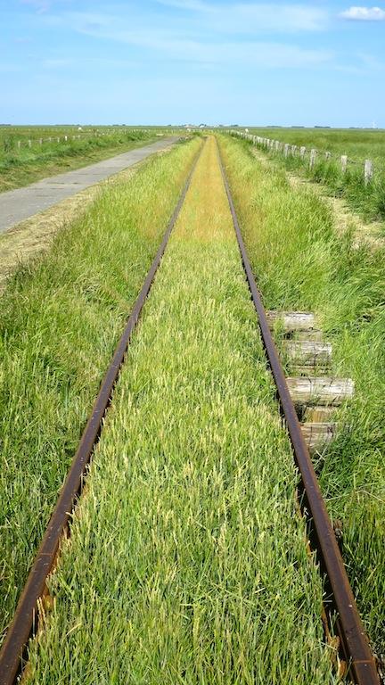 The Tracks   (photo by Suzi)