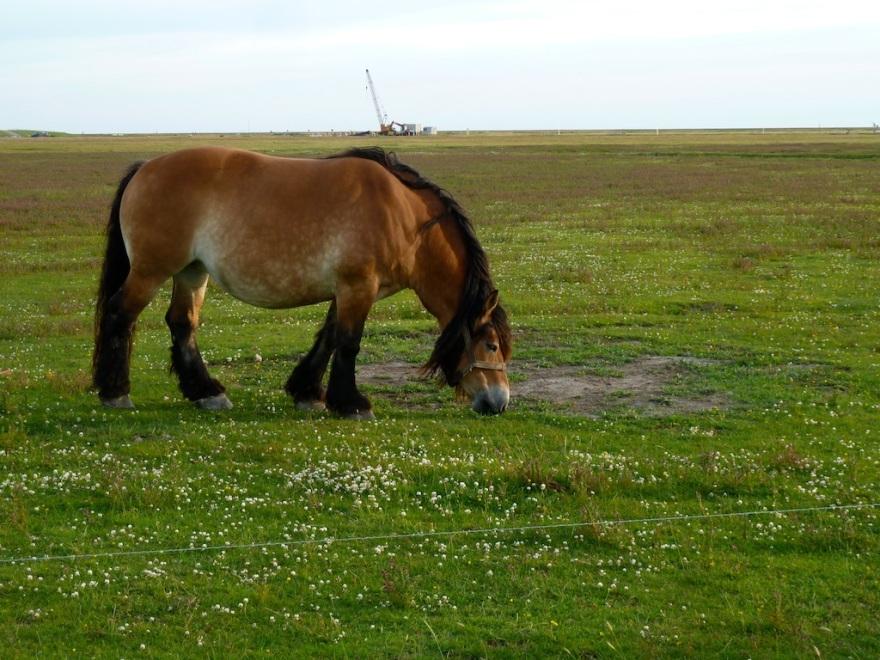 A Huge Horse