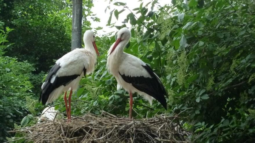 Mr. and Mrs. Stork