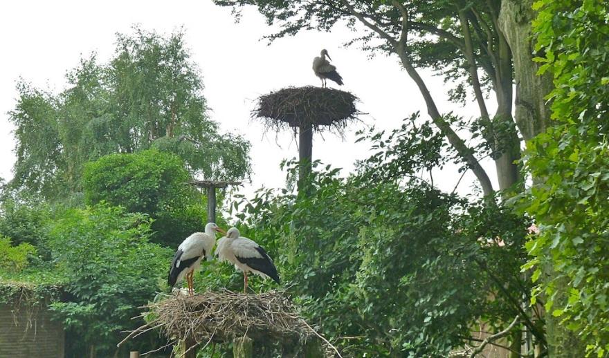A Yard Full of Storks