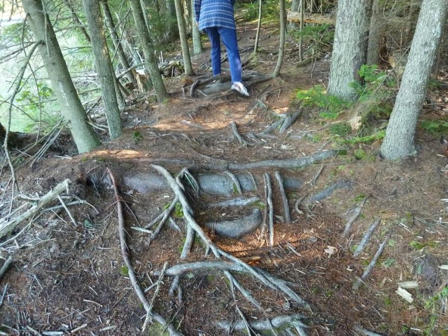 A park trail