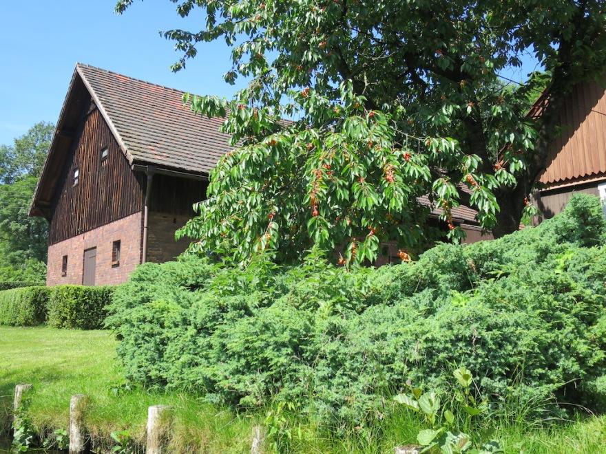 Brick house with cherry tree