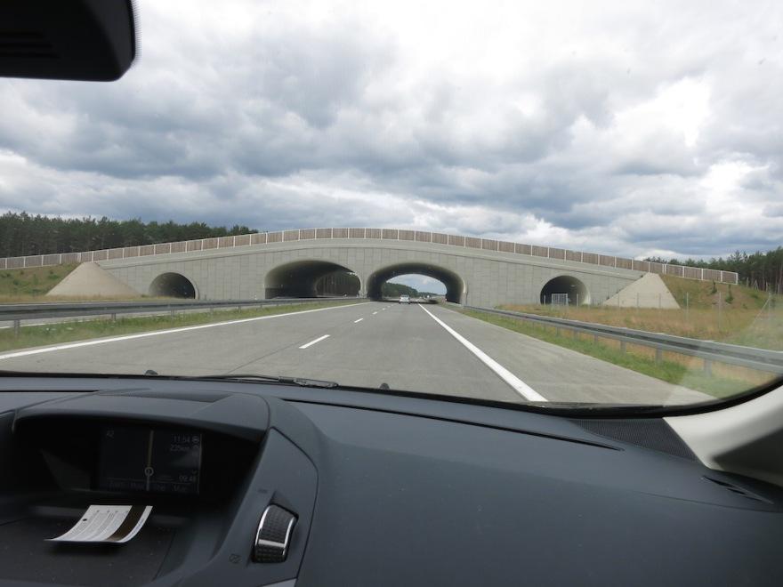 Bridge for animals to cross the highway