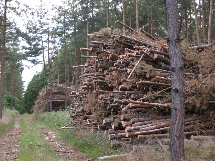 Forests are tended and cleared regularly.