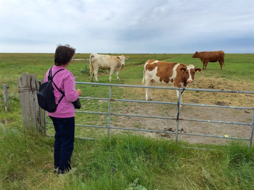 Eva saying hello to the cows