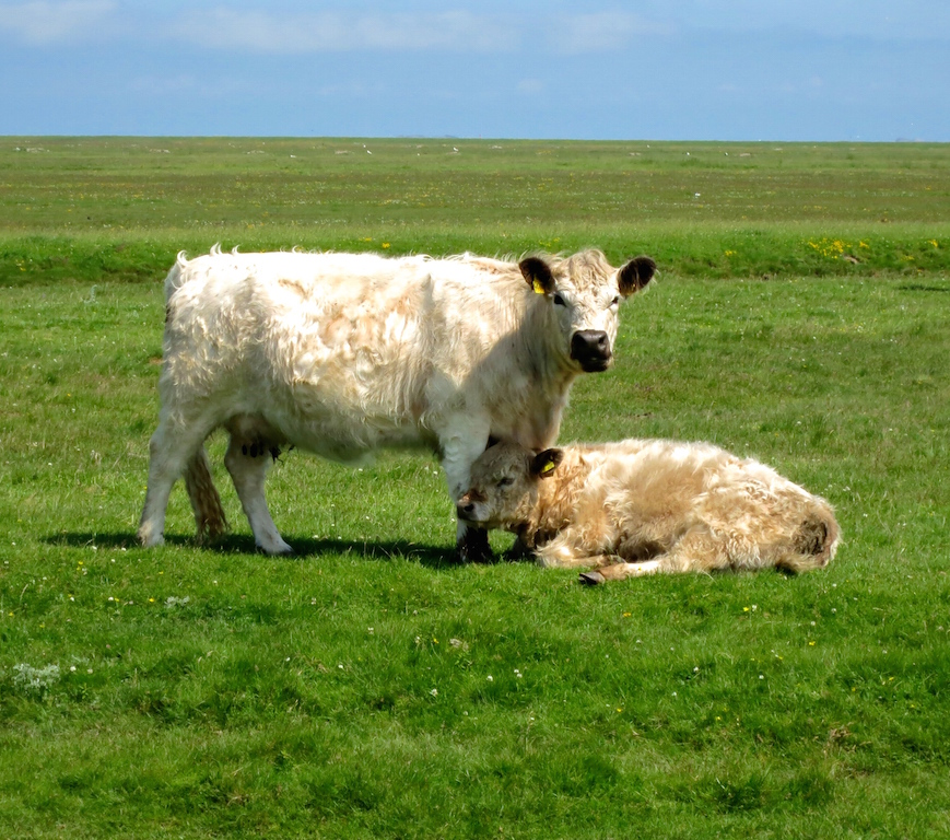 Galloway Mother and Child