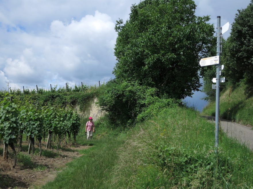 An unofficial route through the vineyards.