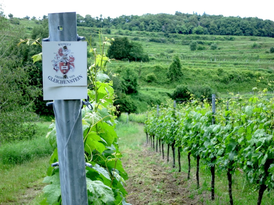 Many small vineyards are here, planted in numerous grape types and owned by many different people.