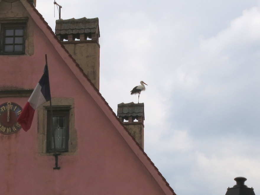 A real stork
