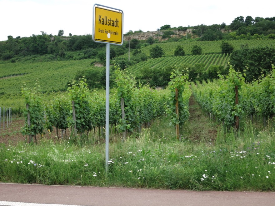 Just look at the vineyards right up to the edge of town.