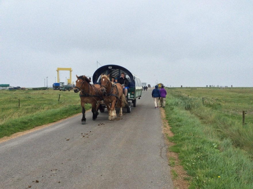 Horse drawn conveyance for the tourists