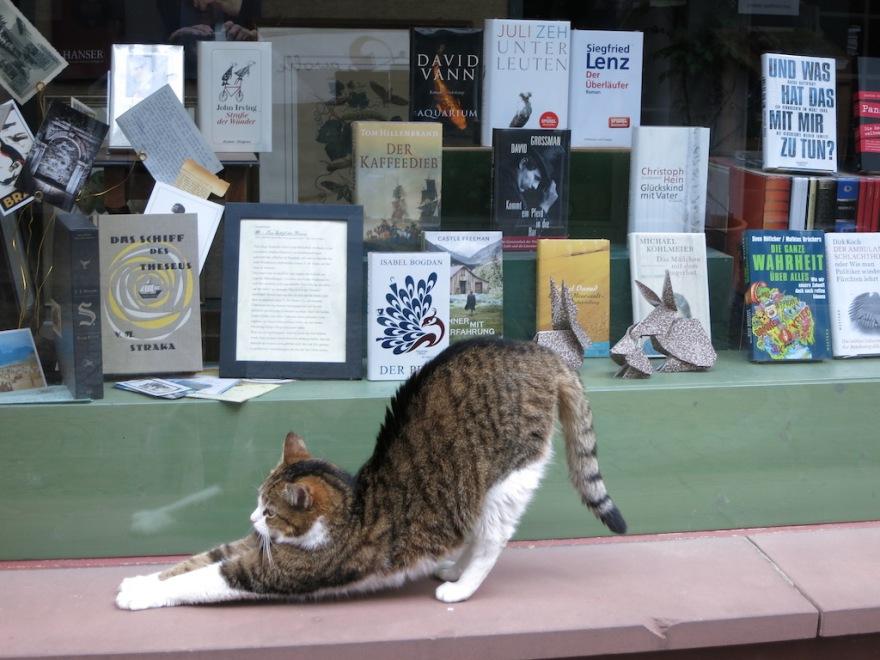 gelnhausen Cat in bookstore window